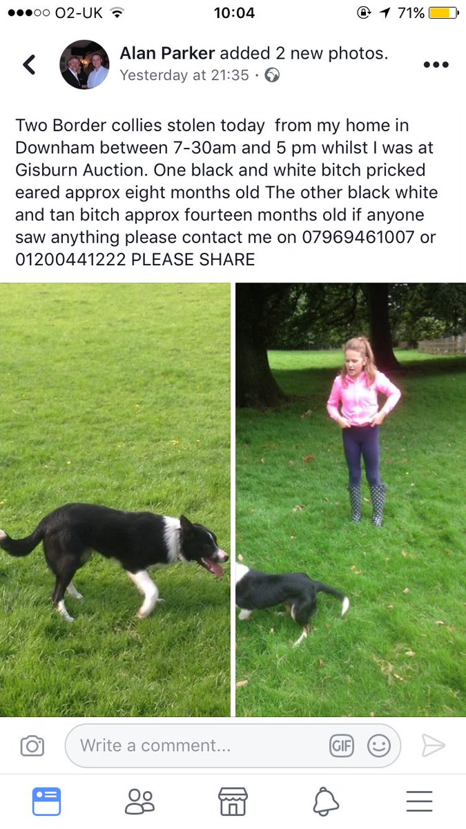 Shocking that this happened on my doorstep back home! Please share and help find Alan his dogs  #BorderCollies #sheep365 <br>http://pic.twitter.com/ks7lvc63rq