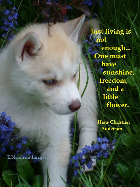 Just living is not enough. One must have sunshine, freedom, and a little flower. #quote #sunshine #freedom #flower <br>http://pic.twitter.com/KoLMzhDi8y