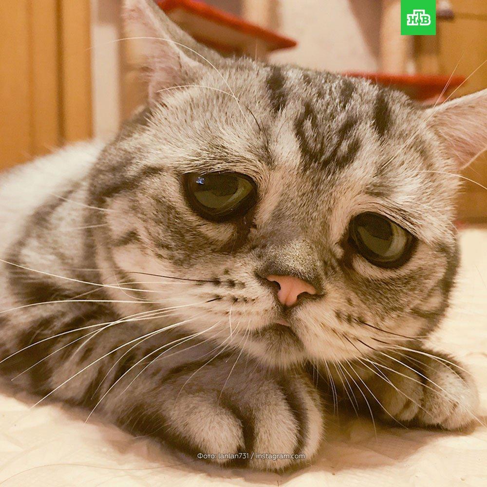 В Пекине нашли самого печального кота в мире. Возможно, он грустит, потому что не может подписаться на наш Telegram https://t.co/8t0DOEjXUe