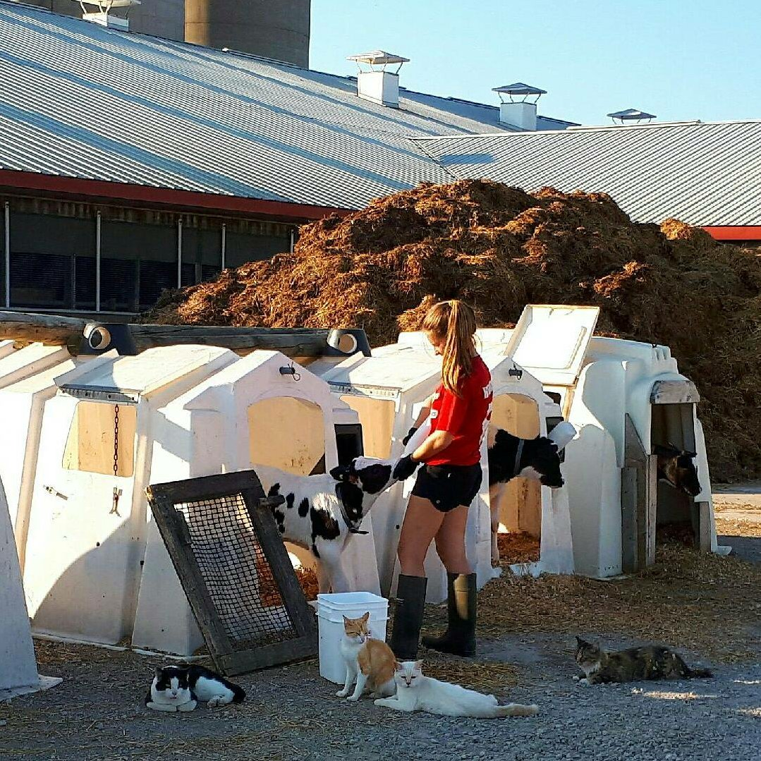 Feeding calves with lots of little helpers @ScenicHolsteins @stonetowncheese #FarmLife <br>http://pic.twitter.com/1g2knmP1gl