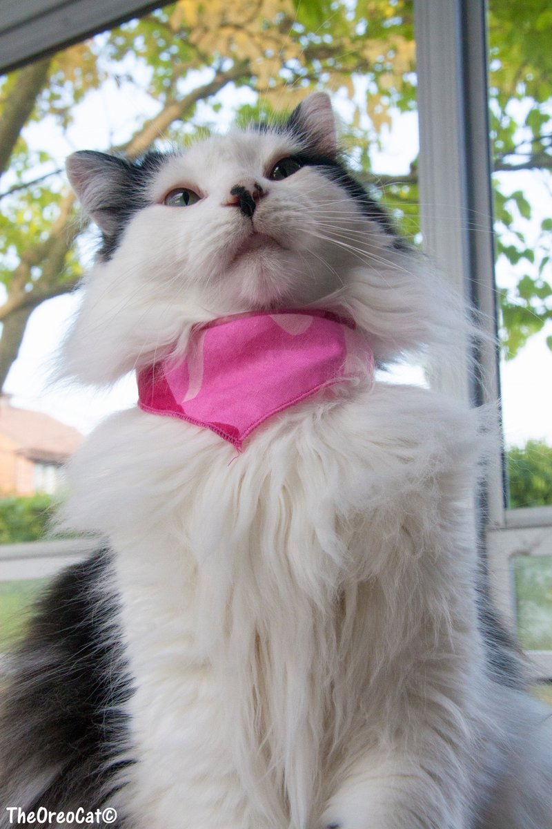 All you need is love  and a cat... or two, or five. #theoreocat #cats #CatsOfTwitter <br>http://pic.twitter.com/h977PJGEDE