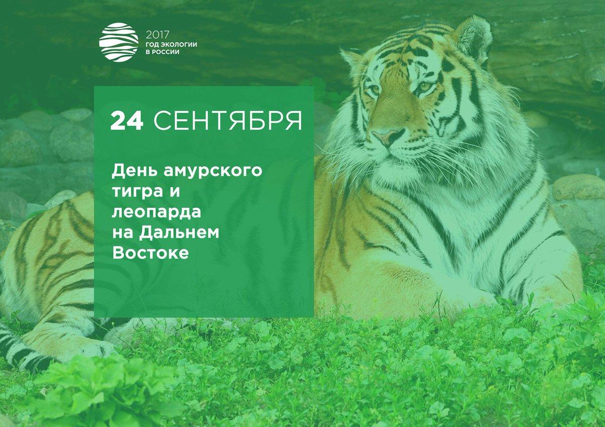 Открытки день тигра на дальнем востоке