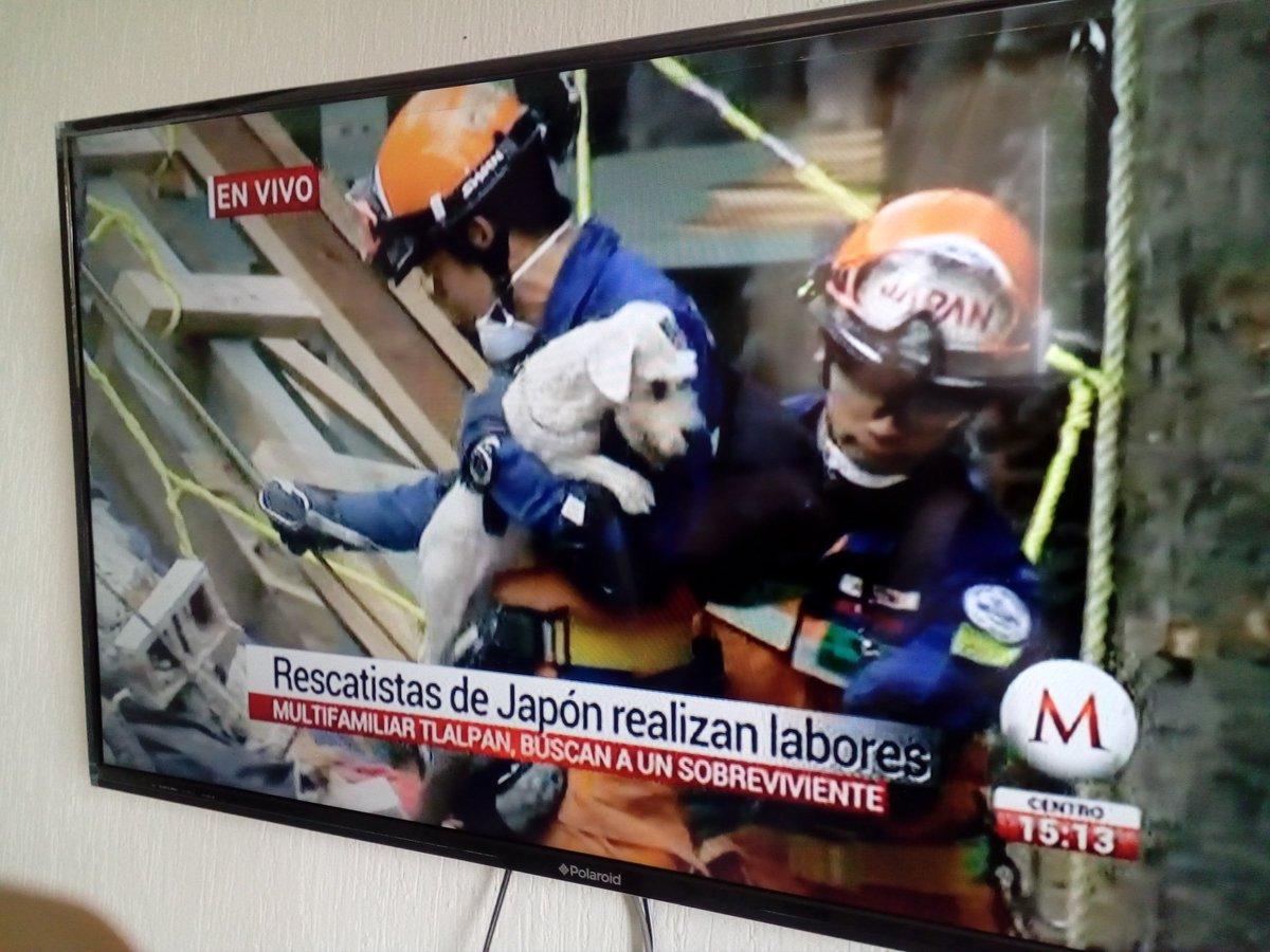 ¡Reciente rescate en #MultifamiliarTlalpan! Un perrito