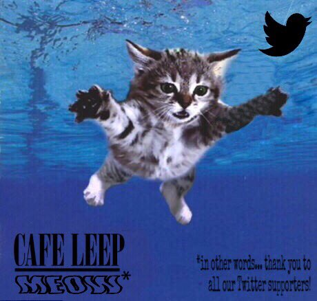 On this day in 1991, #Nirvana released their 2nd album &quot;Nevermind&quot;. They rock &amp; so do our awesome #twitter supporters! #Caturday #cats (1/2)<br>http://pic.twitter.com/gfIpxb5FZc