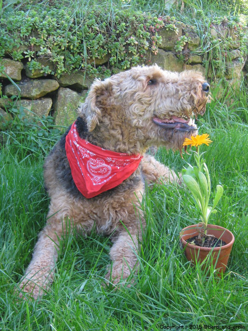 A dog&#39;s #smile is a 100% healthy and free upper. So get your share. #dogsarejoy<br>http://pic.twitter.com/2oR1pcxwqA