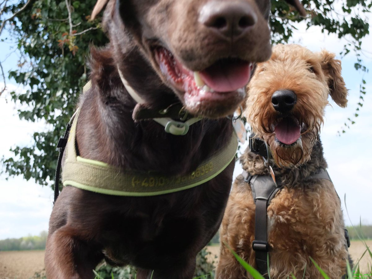 Watch out! We are coming for your #smile! #dogsarejoy<br>http://pic.twitter.com/4uq0xWlNO2
