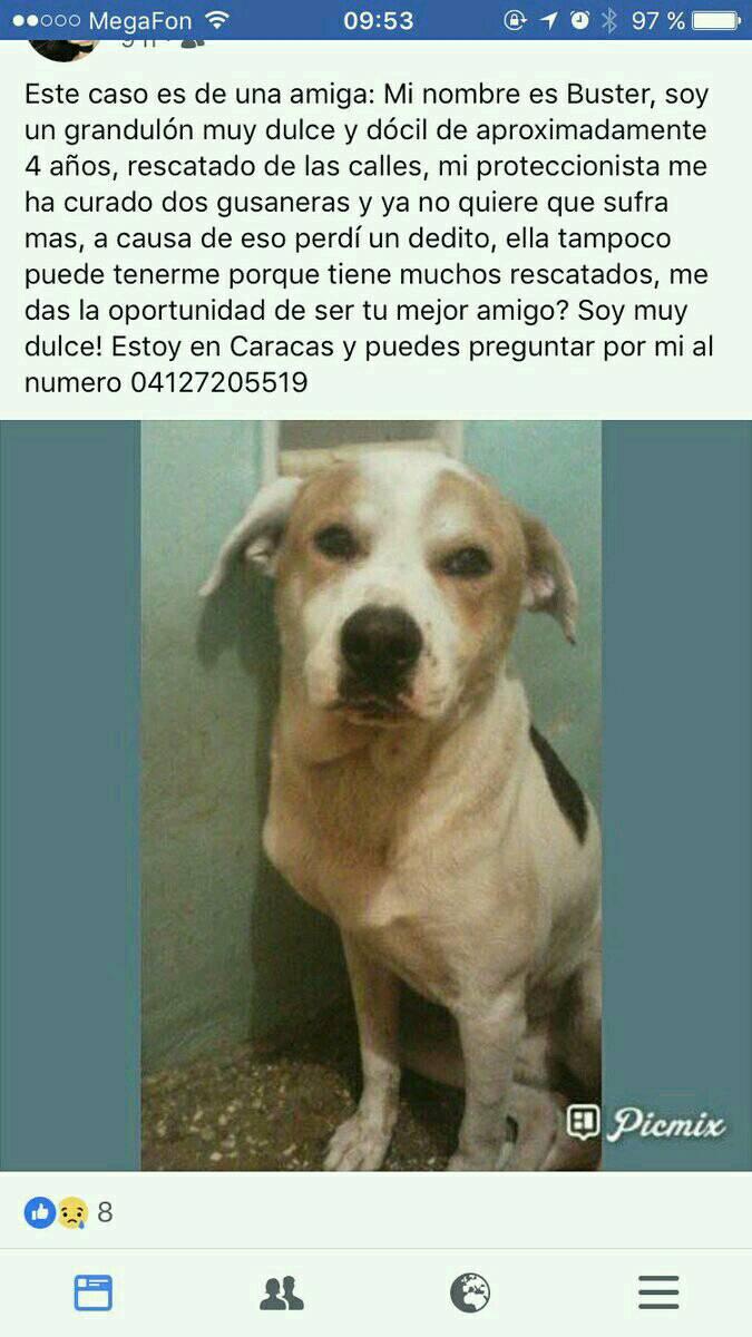 Buster #BuscaUnHogar #Caracas RT @MarianaToqui: @PerroUsuario<br>http://pic.twitter.com/HOkBMnFC9x