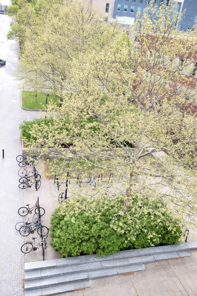 #DYK: The UI is a Silver Bicycle Friendly University. Learn more about biking at Iowa:  http:// spr.ly/601982LUT  &nbsp;   <br>http://pic.twitter.com/uycsTCkjq7