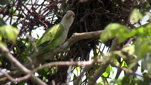 Comunicação das aves do Pantanal é projeto de estudo para cientistas:  https://t.co/1I2q3LGcxg #GloboReporter