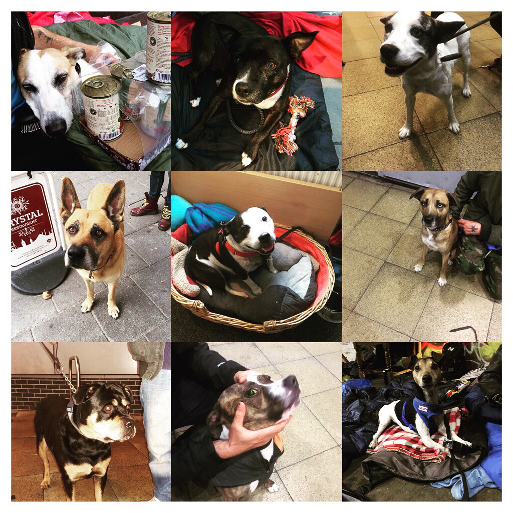 Number of dogs belonging to London&#39;s homeless checked and treated by the StreetVet team this week = 14 #vet #street<br>http://pic.twitter.com/QojTful2bt