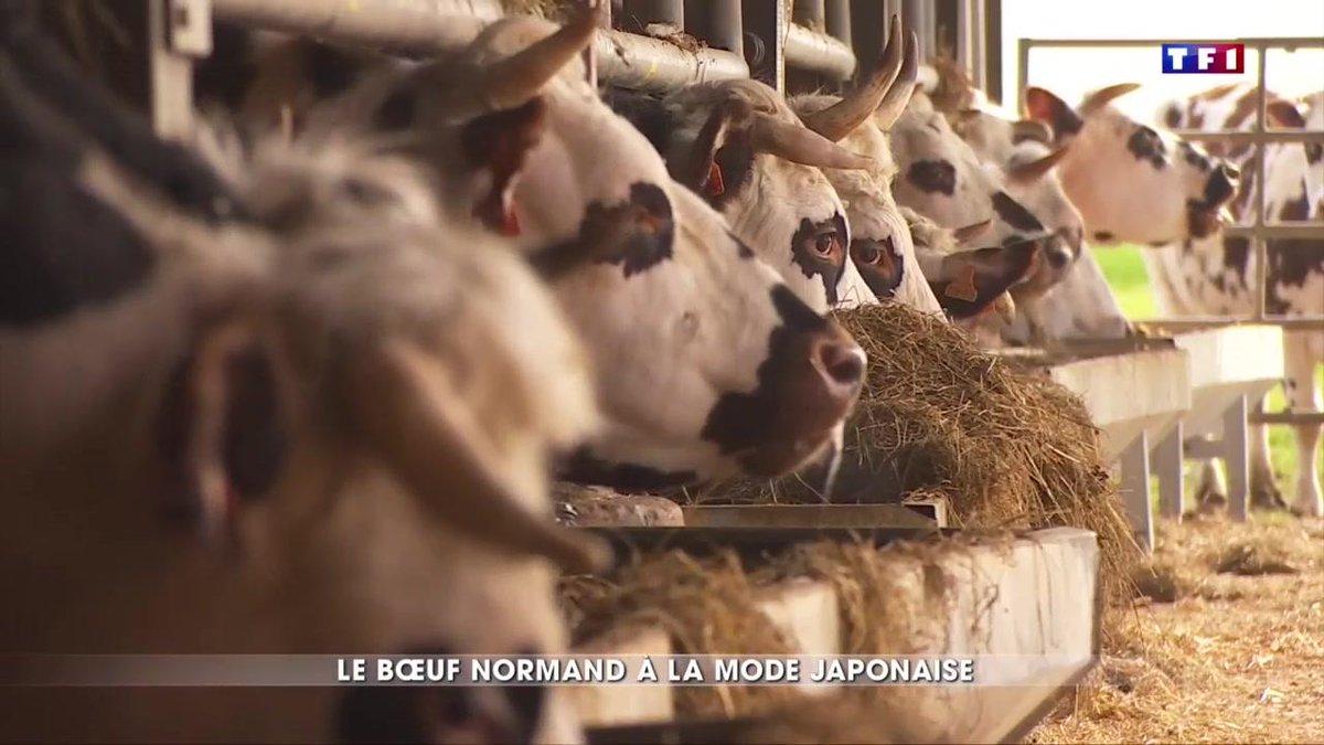 Des bovins élevés au cidre : un bœuf de Kobé normand ? https://t.co/qryGrBnSUu