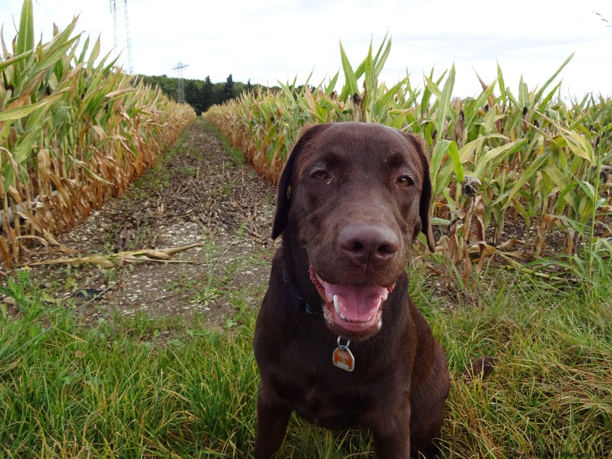 I just wanted to cheer you up. So I gift you this #dog #smile. #dogsarejoy<br>http://pic.twitter.com/WYbbFK1UPn