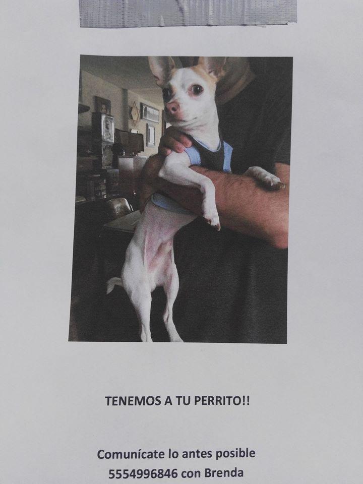Se encontró en la colonia San Rafael https://t.co/gJwnYhsP6v