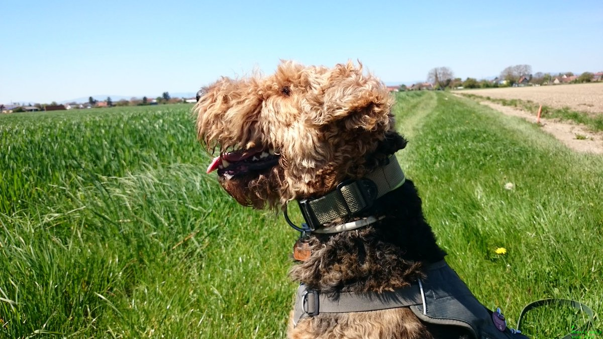 Let me gift you Berti&#39;s #smile to cheer you up! #dogsarejoy<br>http://pic.twitter.com/lpPkM9BGLN