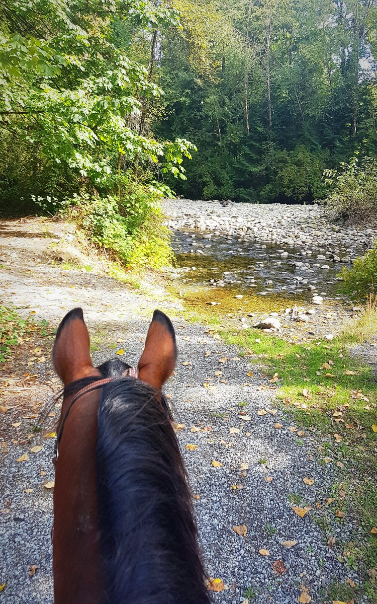 Kal and I had a lovely little adventure today  #horses #horsehour #247equestrian #riderhour #equinehour<br>http://pic.twitter.com/FkA2W9SQ8f