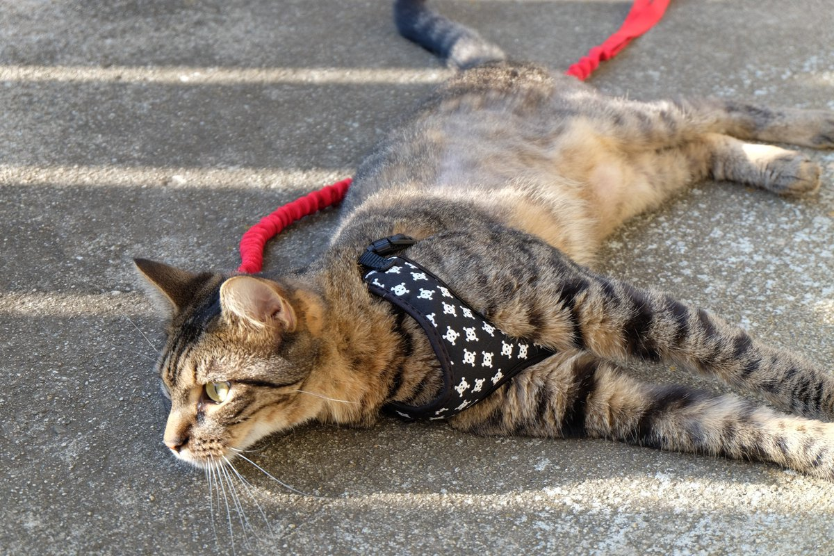 Ugh! Vern treats me like a common dog. @GremmysLife @branleonhardt @PaigeTurner62 #Caturday #CatsOfTwitter<br>http://pic.twitter.com/eyJgS98Ye6