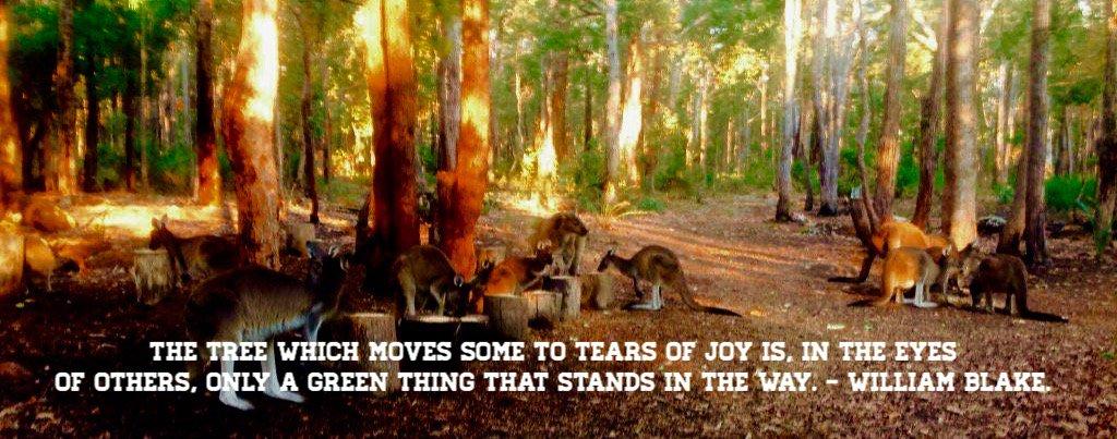 #forest #beauty #trees #kangaroos pinching #birdseed #colinhabbott #jarrahdale #colinhughabbott @RoGodwinw67 #morning <br>http://pic.twitter.com/stxuMEDqWR
