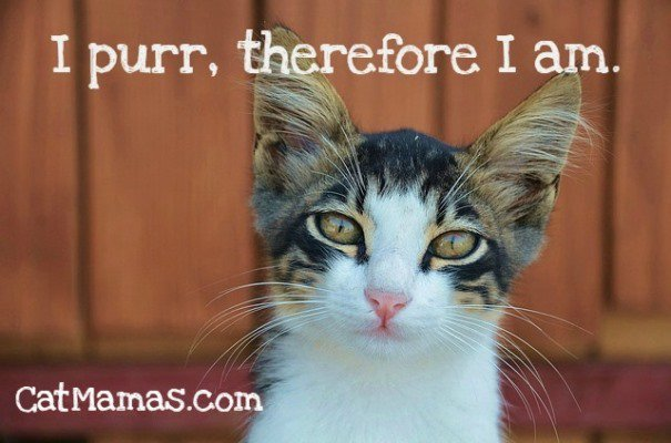 Is this the strongest sense of self in the world? Who needs #therapy?? #cats #lifecoach #selfhelp<br>http://pic.twitter.com/oBXNf3rp5d