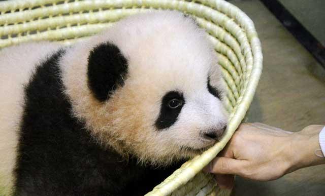 ジャイアントパンダの赤ちゃんの名前は…「シャンシャン」(香香)に決定!たくさんのご応募ありがとうございました。東京ズーネットお知らせ☞tokyo-zoo.net/topic/topics_d… pic.twitter.com/sScYqWHZS6