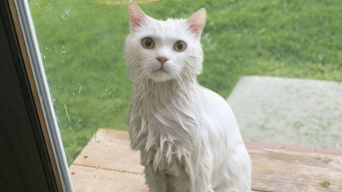 Rain-Drenched Cat Announces It Ready To Stay Inside And Be Part Of Family https://t.co/eys1JmHjDz https://t.co/CpyvMIxw4W