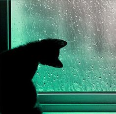 #RainyDay here in #London Bet lots of cats will be playing &#39;follow the raindrops&#39; today #weather @TreasuryMog #ambassacats<br>http://pic.twitter.com/N3avn6icYf