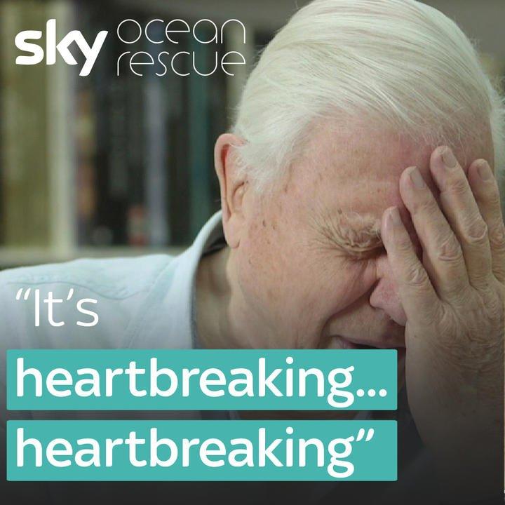 David Attenborough calls the impact of plastic waste on wildlife 'hear...