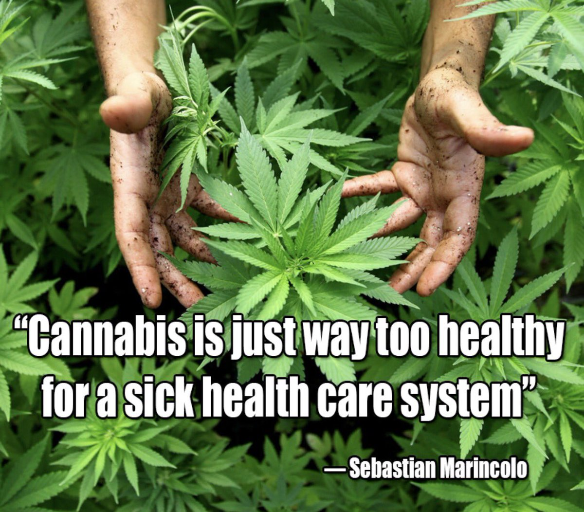 And it&#39;s #Cannabis that is starting to heal that system &amp; everyone out there affected by it! #marijuana #educateyourself #science #THC #CBD <br>http://pic.twitter.com/pXjyrHoYaI