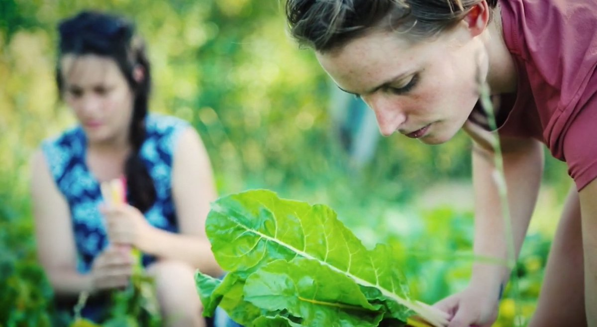 The Princeton Review ranks Cornell number 7 among &quot;Top 50 Green Colleges&quot;  https://www. princetonreview.com/press/green-gu ide/press-release &nbsp; …  #Sustainability <br>http://pic.twitter.com/doTOL7mlPV