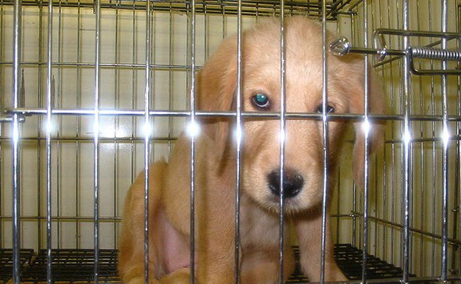 &#39;Success! #California Poised To Become First State To Ban Puppy Farms&#39; More progress in States:  http://www. care2.com/causes/success -california-poised-to-become-the-first-state-to-ban-puppy-mills.html &nbsp; …  #wheresmum #adopt<br>http://pic.twitter.com/YrEsiTVs6h