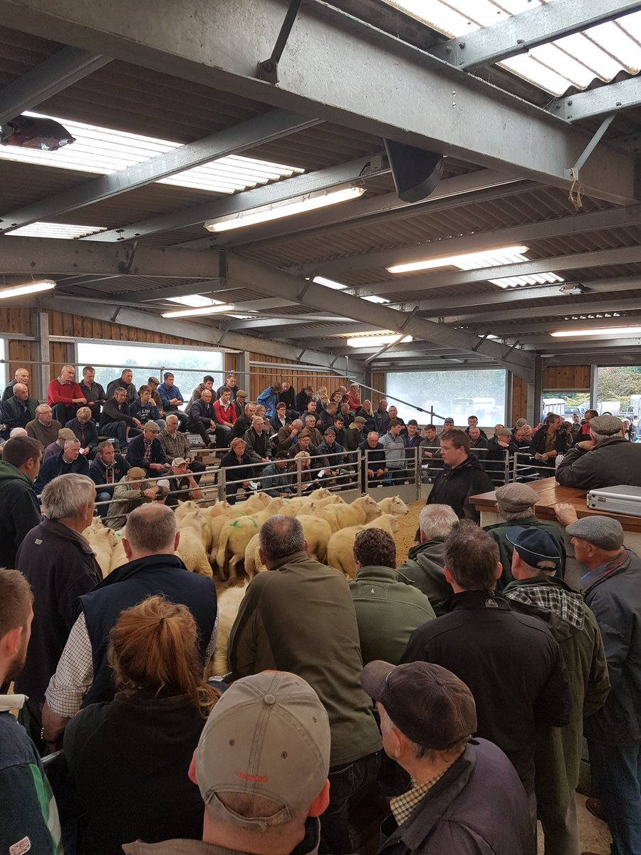 Here at the @NFUMWelshpool and @NFUCymru sponsored breeding ewe sale @WlsMarket #BackWelshFarming #sheep365 #ProudtoProduce<br>http://pic.twitter.com/nyreWIVSip