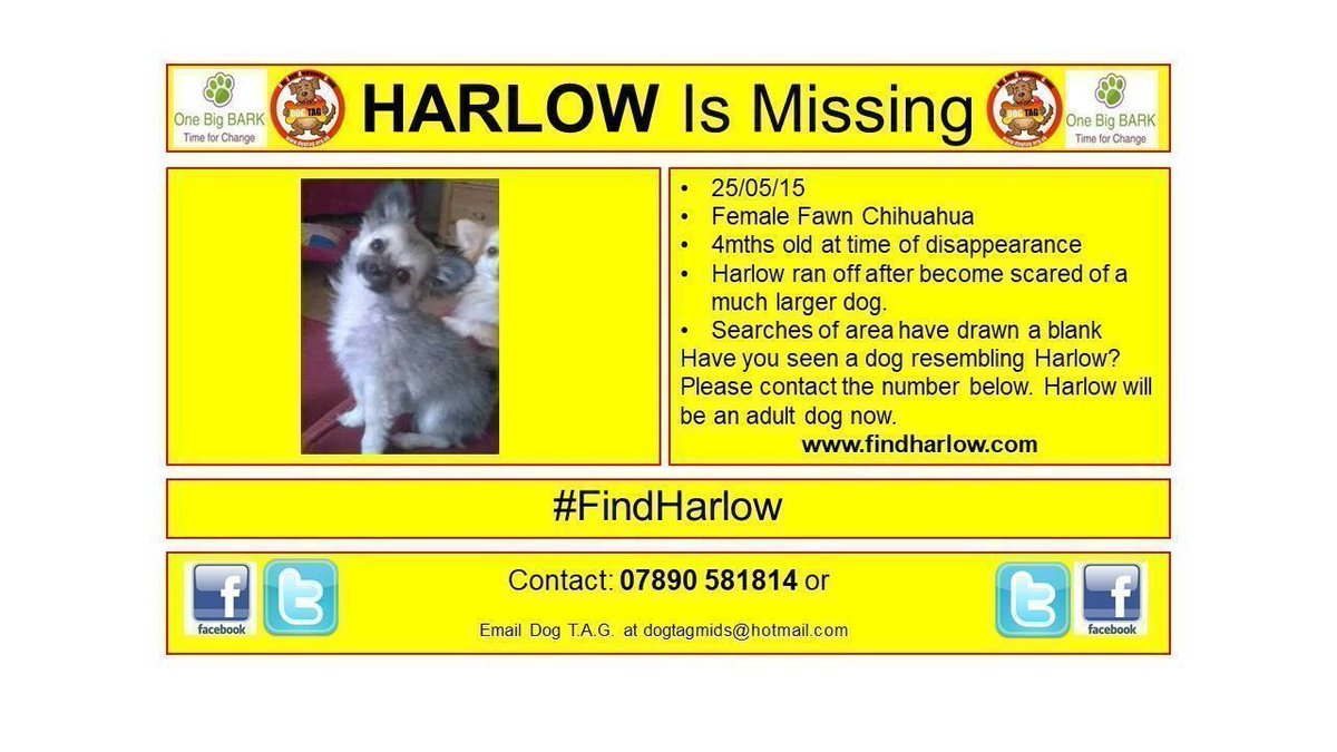 #FindHarlow #Chihuahua #MissingDog #Wales Lost but not forgotten <br>http://pic.twitter.com/tztAoVnpld