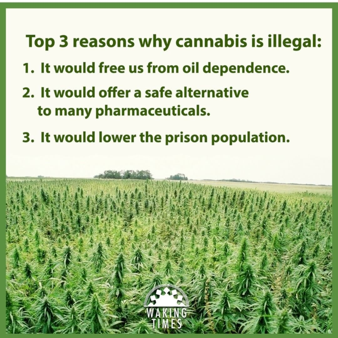 The top three reasons #cannabis remains illegal.  <br>http://pic.twitter.com/ojt42QGcNE