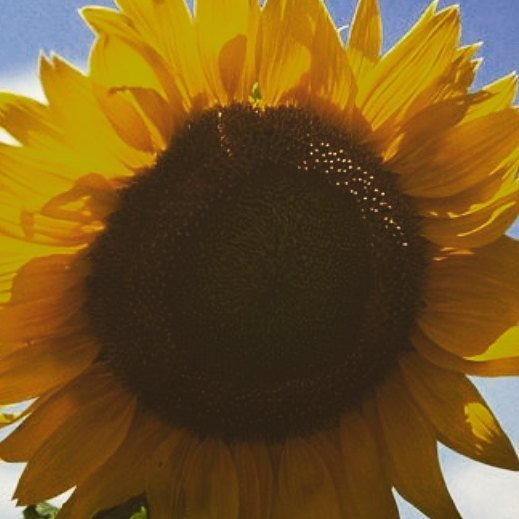 My last few #sunflowers are staring down at me. #sunflower #sunshine #flowers #fleur #flowerart #flowerpic  http:// ift.tt/2wNdgRY  &nbsp;  <br>http://pic.twitter.com/KD4fCBuXYR