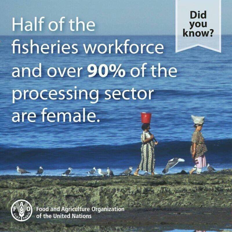 Yet, #women are underrepresented in #ocean &amp; #fish strategy, management &amp; decision-making at both the community level &amp; international level <br>http://pic.twitter.com/WrohQxnVqw