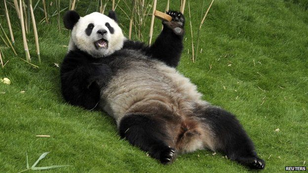 Panda says Let&#39;s recycle, who&#39;s with him? #RecycleWeek #Sustainability #eco #enviromoment #GoGreen<br>http://pic.twitter.com/aPXwREiV0m