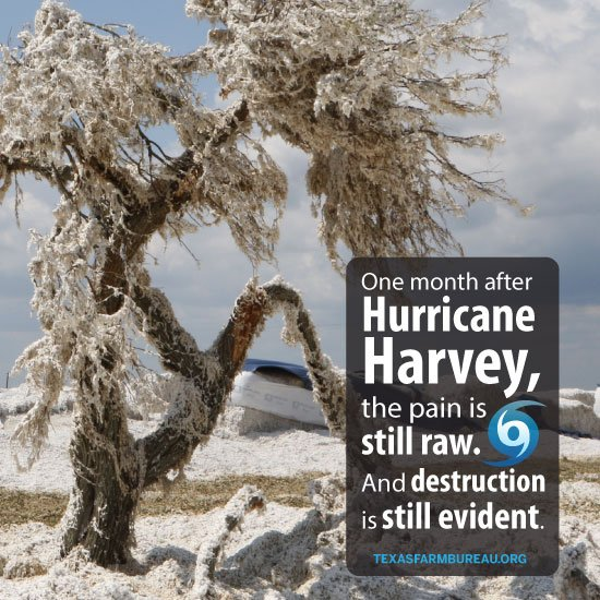 One month after #HurricaneHarvey. A long month. Of recovery, rebuilding &amp; evaluating losses.  http:// bit.ly/YTAM092517  &nbsp;   #farmlife <br>http://pic.twitter.com/QIRo0fBOV9