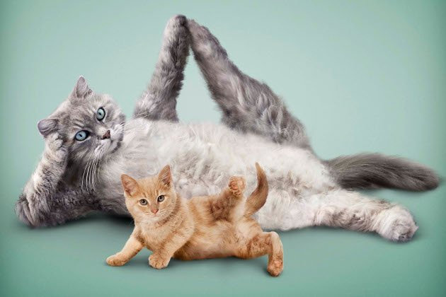 Are you Fitness  today? #yoga #Catholic #cat #puppy #cute #Fitness  #kitten #sports <br>http://pic.twitter.com/XijXbouWvu