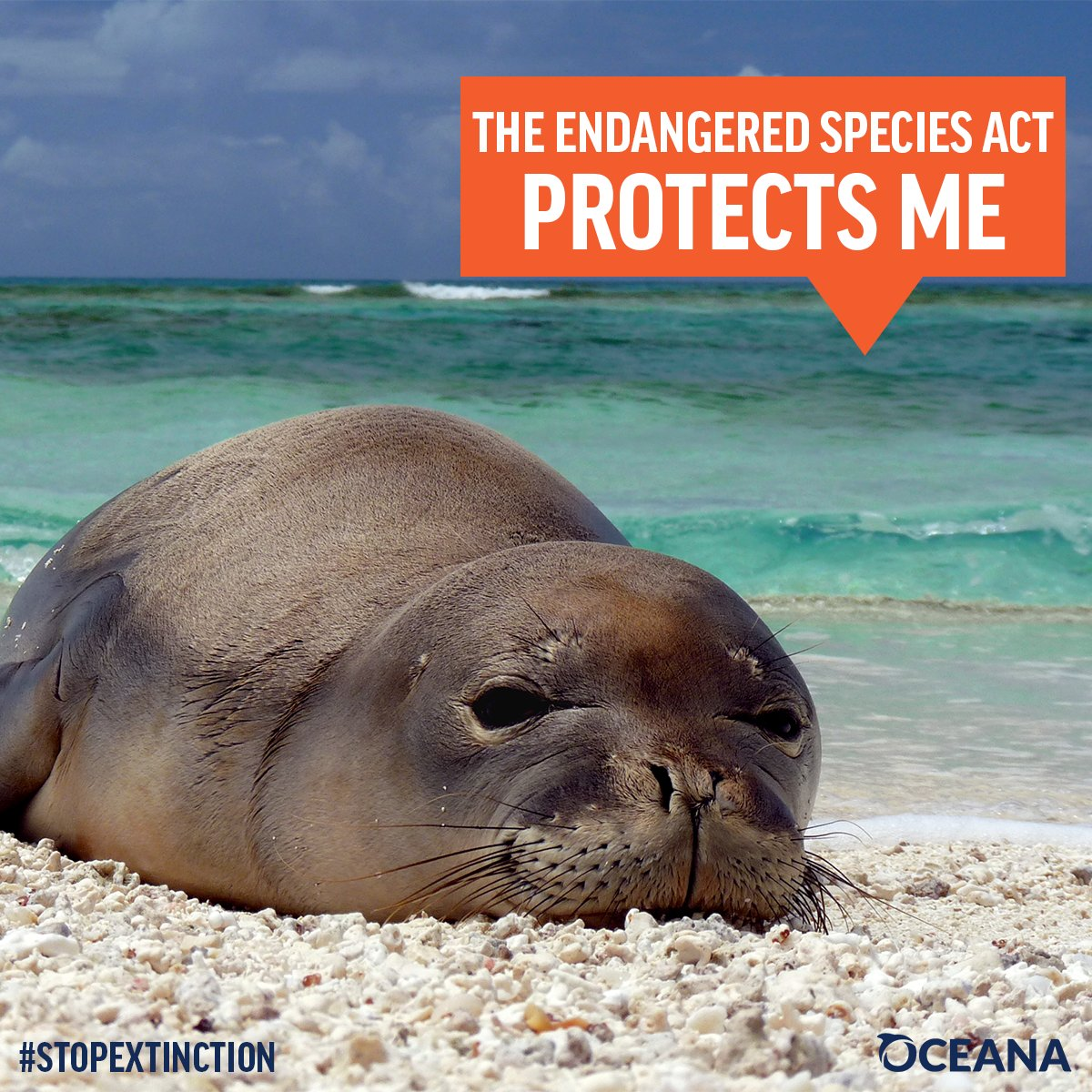 RT: Don't let rare species like the Hawaiian monk seal slip towards extinction. Tell Congress if we want to #StopExtinction we need the #ESA<br>http://pic.twitter.com/TxitkOu5uU