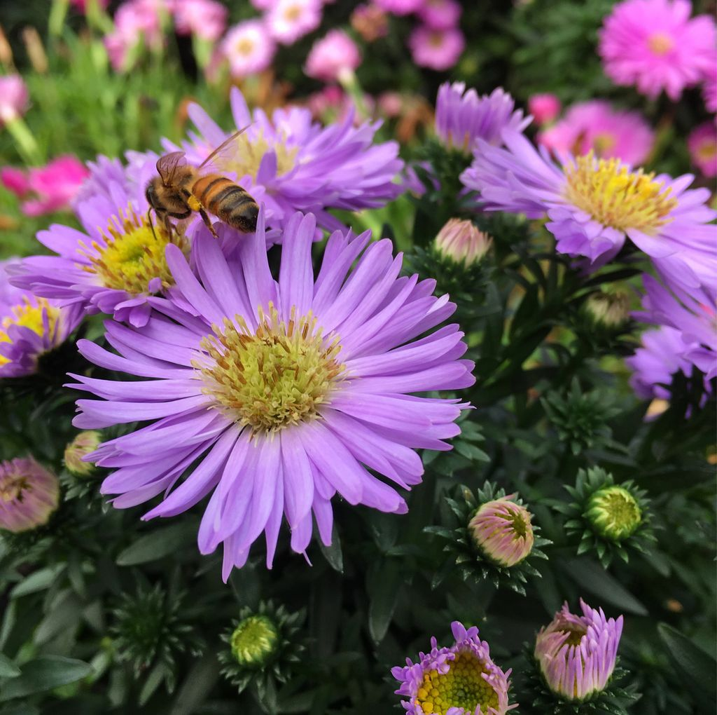 Happy Monday! #asters #fall #flowers <br>http://pic.twitter.com/nxOzqr8cEK