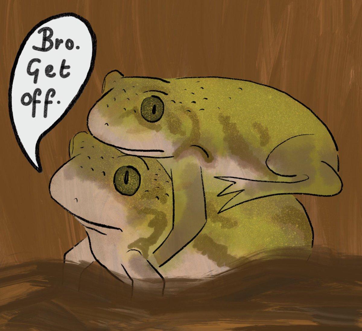 Bro. Get off. @AnimalAlphabets #AnimalAlphabets #XanthophryneTigerina #toad #animal #illustration #digitalart #procreate #justacoupleofguys<br>http://pic.twitter.com/BhfvPkMDDY