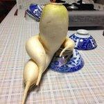 ただの野菜なのに取引してる気にw規格外の大根のフォルムが逸脱すぎる件!