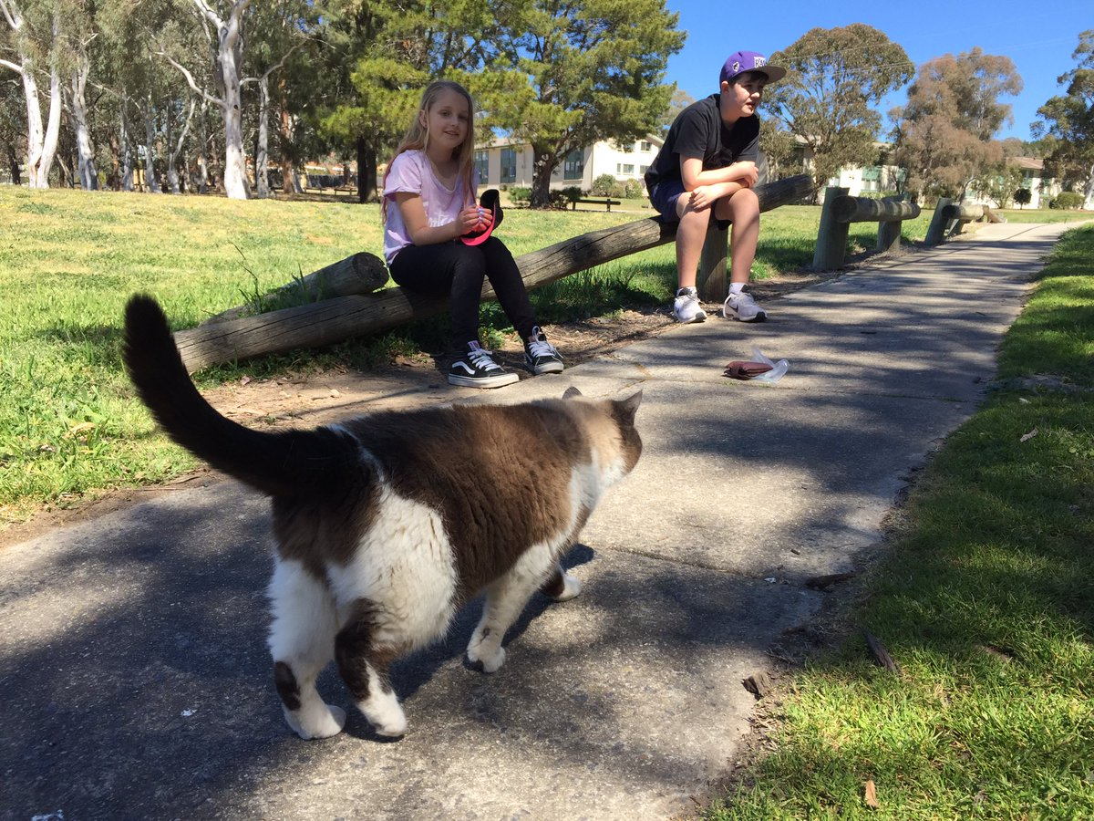 Out watching birds &amp; met a beautiful cat but wished it wasn&#39;t roaming. @TSCommissioner #CatContainment #birdlife @EnvComm_ACT <br>http://pic.twitter.com/YGgaToAdAY