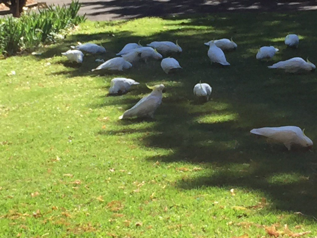 #breakfast time in @RBGSydney - plenty for everyone #Sydney https://t....