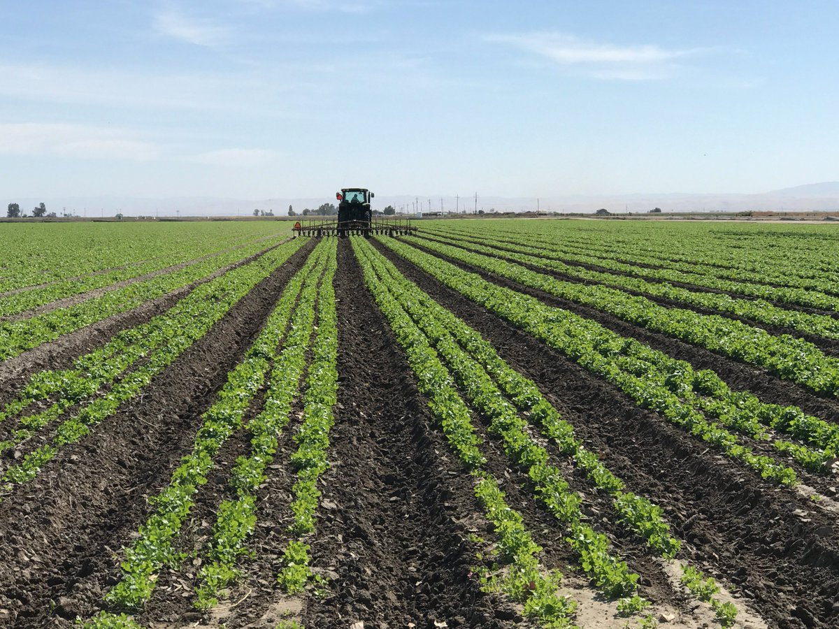Cultivating our #cilantro crop here on the #farm today - not much room for error.  #GPS and #precisionag #technology. #cawater = #food<br>http://pic.twitter.com/GysAFGbF0k