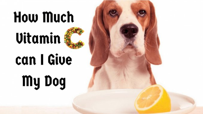 Feed #VitaminC to Your dog for Healthy life. Add your pet diet vitamin C and keep them healthy. Visit here.  https:// goo.gl/pne6vw  &nbsp;  <br>http://pic.twitter.com/bwGWnb4fpb