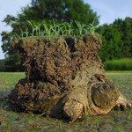 リアルに島を背負っている亀!現実世界にもこんな亀がいるなんて本当に驚き!
