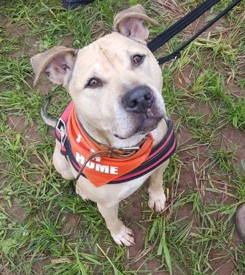 Marshall  what a cutie  needs a furever home this #charitytuesday Plz   http://www. findingfureverhomes.org.uk/dogs/marshall/  &nbsp;  <br>http://pic.twitter.com/WvqBNx597g