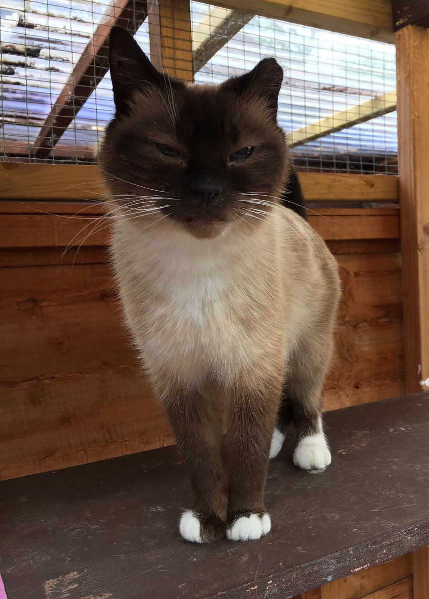 Not able to have a pet of your own? How about sponsoring one of our long term residents like Pansy. See website for details #charitytuesday <br>http://pic.twitter.com/TQcXGZSJhL