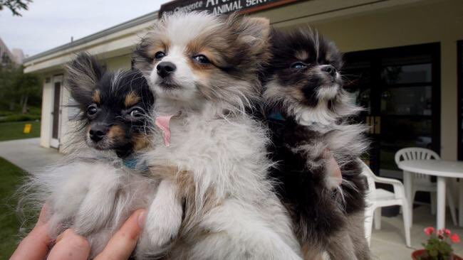 Puppy mills are hubs of animal cruelty. We don&#39;t need their business in #California  http://www. latimes.com/opinion/opinio n-la/la-ol-puppy-mills-bill-20170920-story.html &nbsp; …  @latimes #puppymils #wheresmum <br>http://pic.twitter.com/gPJeuocT98