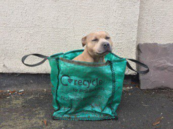 dont forget to put the recycling out! #RecycleWeek #Recycle #recycleweek2017 #recycling<br>http://pic.twitter.com/ESQEwgefsw